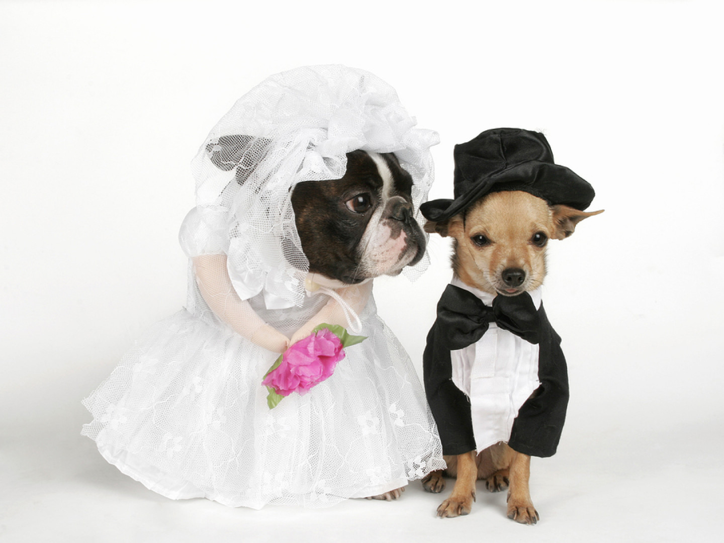 Wedding Day Dog Care